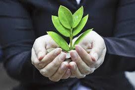sostenibilità bandi